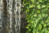 foto of creeper  - green creeper plant with water cascade on the rocky wall - JPG