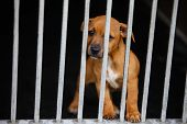 picture of dog eye  - Dog with sad eyes in a cage behind bars - JPG