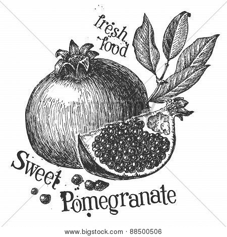 pomegranate on a white background. sketch