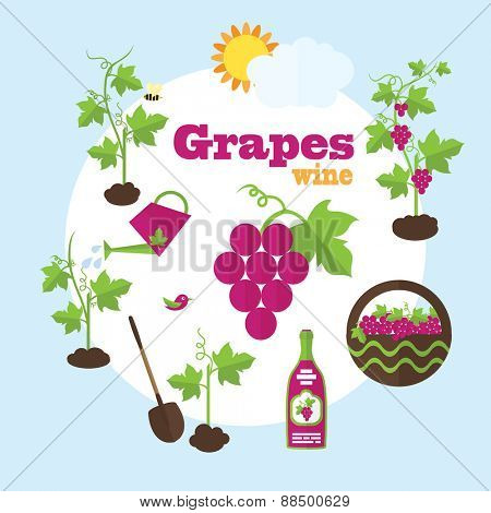Vector garden illustration in flat style. Planting grapes, harvesting, processing grapes into wine.