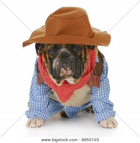 Dog Dressed Up Like A Cowboy