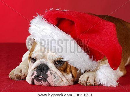 Perro vestido de Santa