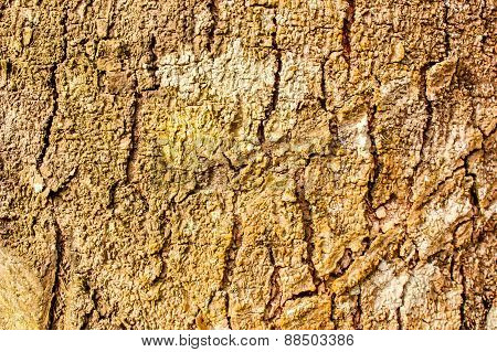 Bark Of Rubber Tree, Wood Seamless Texture Background