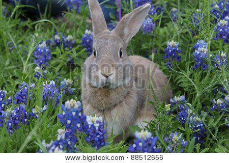 Bunny in Bluebonnets