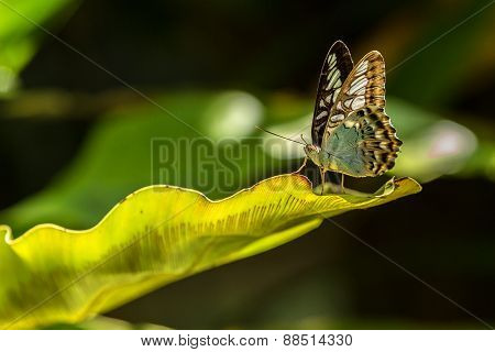 Green butterfly laying on a green leaf