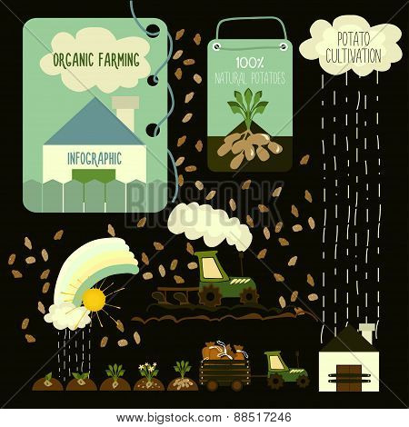 Potato cultivation, infographics.