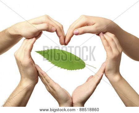 Hands with green leaf isolated on white