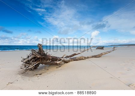 Beautiful Sandy Sea Shore With Driftwood