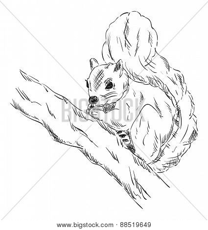 vector - Squirrel on a branch - isolated on background