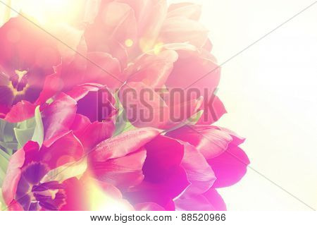 Image of tulips with retro effect