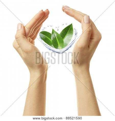 Female hands with green leaves isolated on white