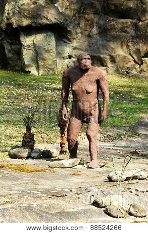 Australopithecus Afarensis Statue At Rocky Ground
