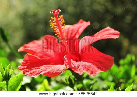 Beautiful red flower on green background