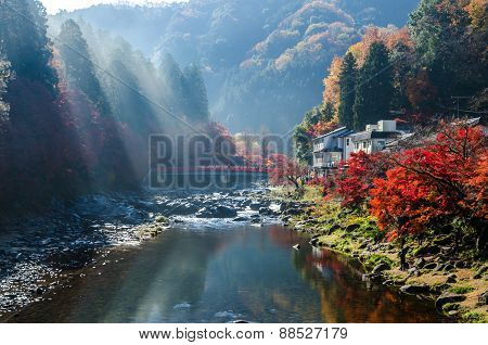 Color Autumn Leaf And River In Japan