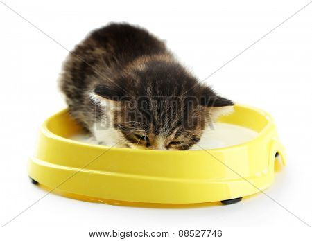 Cute little kitten drinks milk, isolated white