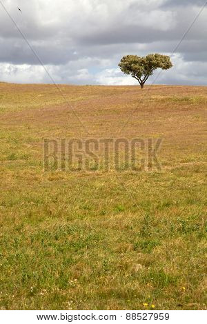 lonely tree in a alentejo farm, the south of portugal