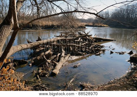 Fallen Branches in a River