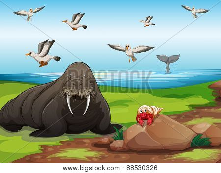 Walrus in beach foreground illustration