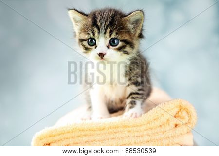 Cute little kitten on towel, on light background