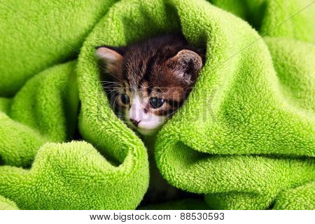 Cute little kitten with towel, close up