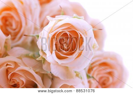 Bouquet of beautiful fresh roses, closeup