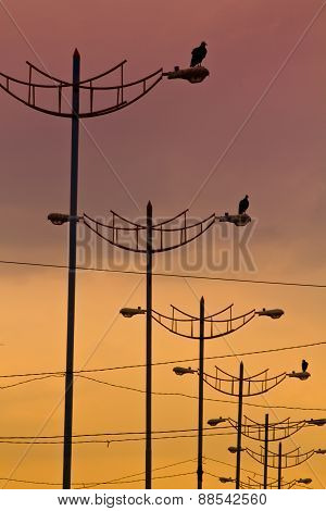 Birds standing on light posts during sunset