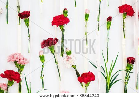 Red And White Carnation Flowers