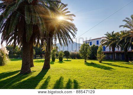 View of tropical coconut palms. Budva, Montenegro, Balkans, Europe. Beauty world.
