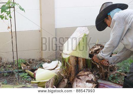 Gardener Cut The Banana Tree
