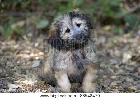 Puppy Cute Curious Happy Fluffy Looking Outdoors Closeup