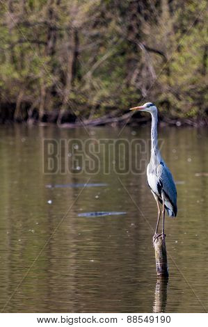 Heron On A Wooden Pole