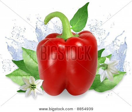 Red Pepper With Water Splashes