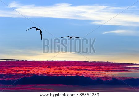 Sky Birds Flying Above The Clouds