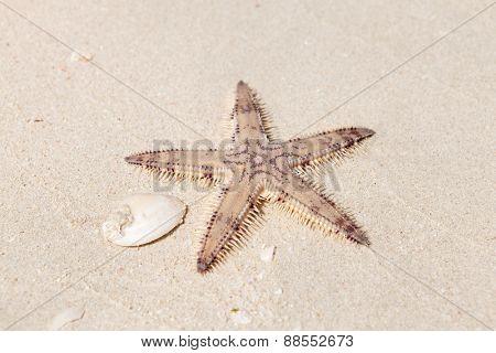 Seastar on the sand of the sea beach