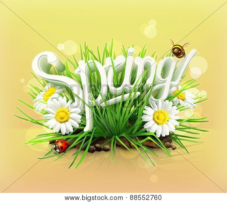 Spring, time for a picnic, grass, flowers of chamomile, a ladybug and a bee in the garden, an universal background