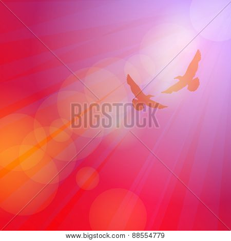 Birds, seagulls silhouette on pink background, sunset, dawn. Vector