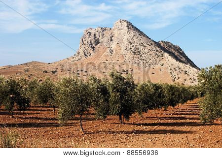 Lovers mountain and olive grove, Antequera.