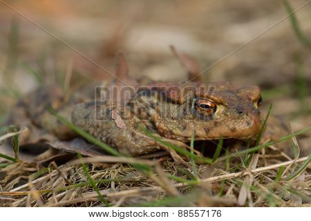 close up of a toad