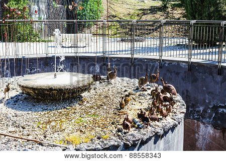 Fountain In Bellini Garden In Catania, Sicily