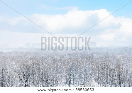 Snow Storm Over City And Forest In Spring