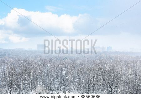 Snow Blizzard Over City And Forest In Spring