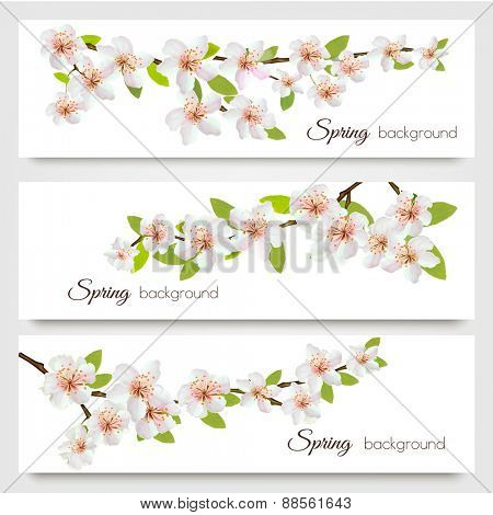 Three sakura branches banners. Vector.