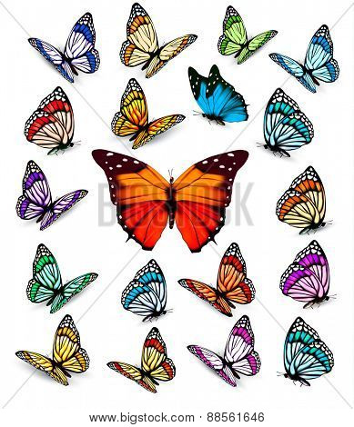 Set of beautiful colorful butterflies. Vector.