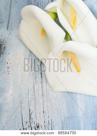 white calla flowers on the wooden background