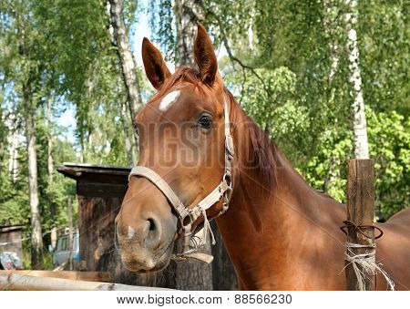The Head Of A Red Horse Behind A Wooden Fence