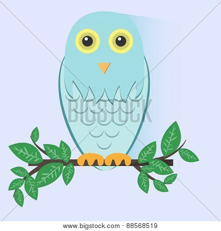 Blue Owl Sitting on a Branch