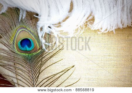 Feather On Background