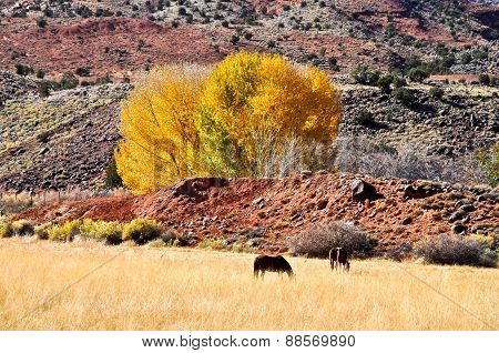 Landscape With Horses In Capitol Reef National Park, Utah