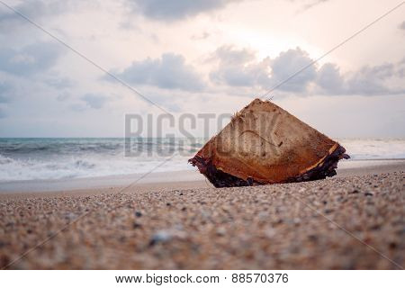 Wood In The Beach After Storm