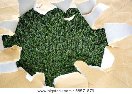 Torn Papaer On Grass